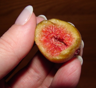 A fig in the hand...
