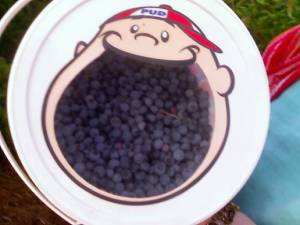 Pud, the Dubble-Bubble Bubblegum mascot, and his stash of blueberries.