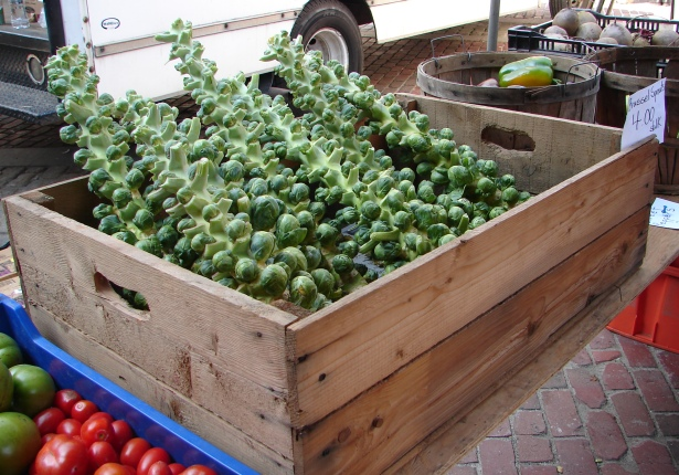 Fresh Brussel sprouts on display