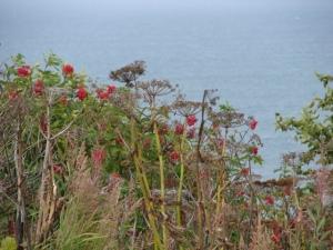 Fall flora above Kachemak Bay