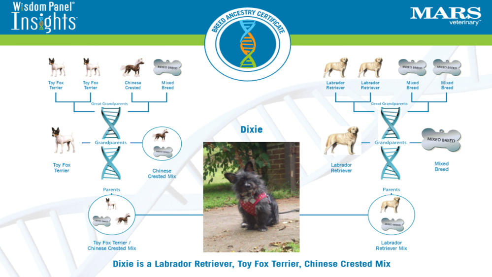 Dixie's DNA results