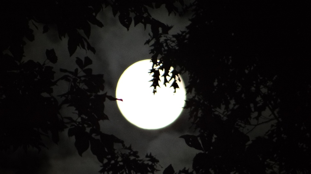 Full moon, seen through the trees