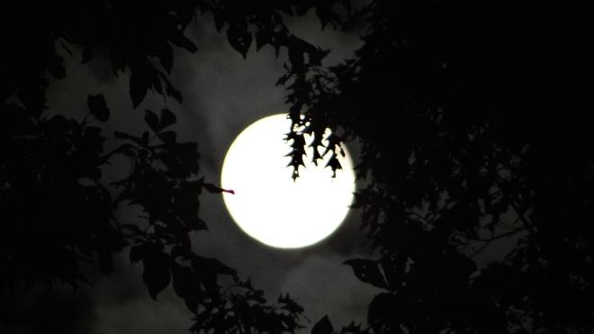 Full moon, seen through the trees